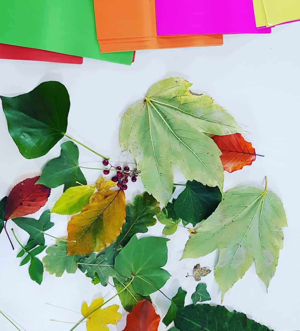 Autumnal Leaves for art project - fall leaves painting